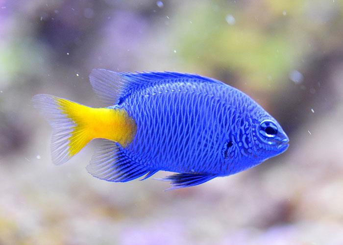Come traslocare un acquario for Pesci tropicali acquario