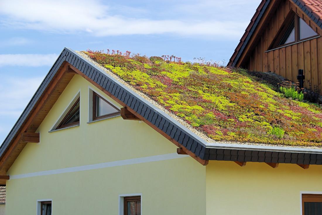 Tetti verdi piani e inclinati prezzi agevolazioni for Piani e prezzi domestici